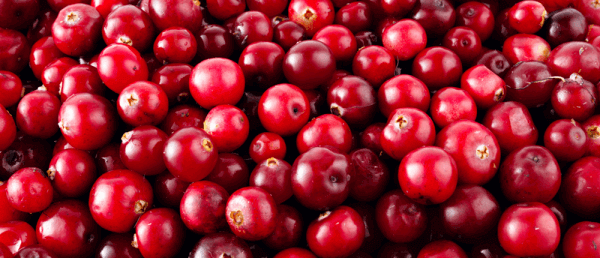 Simply Irresistible � How Cranberry Could Help in the Fight to Defeat Antibiotic Resistance