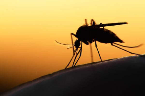 Reduction In Malaria Death Toll But Risk Remains