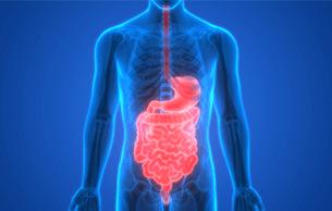 Divulging My Expert Digestive Secrets�