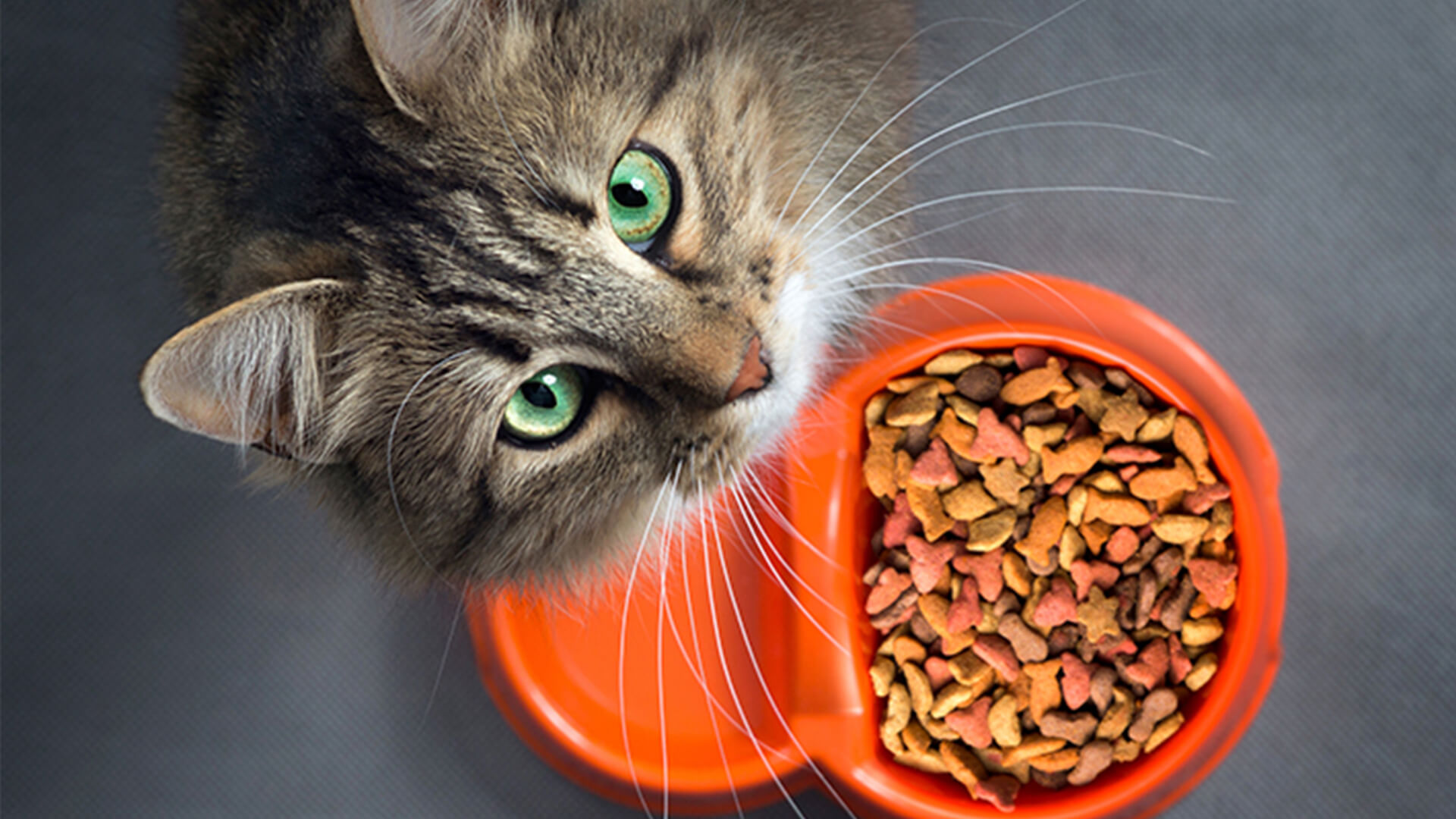 Ethical Pet Food