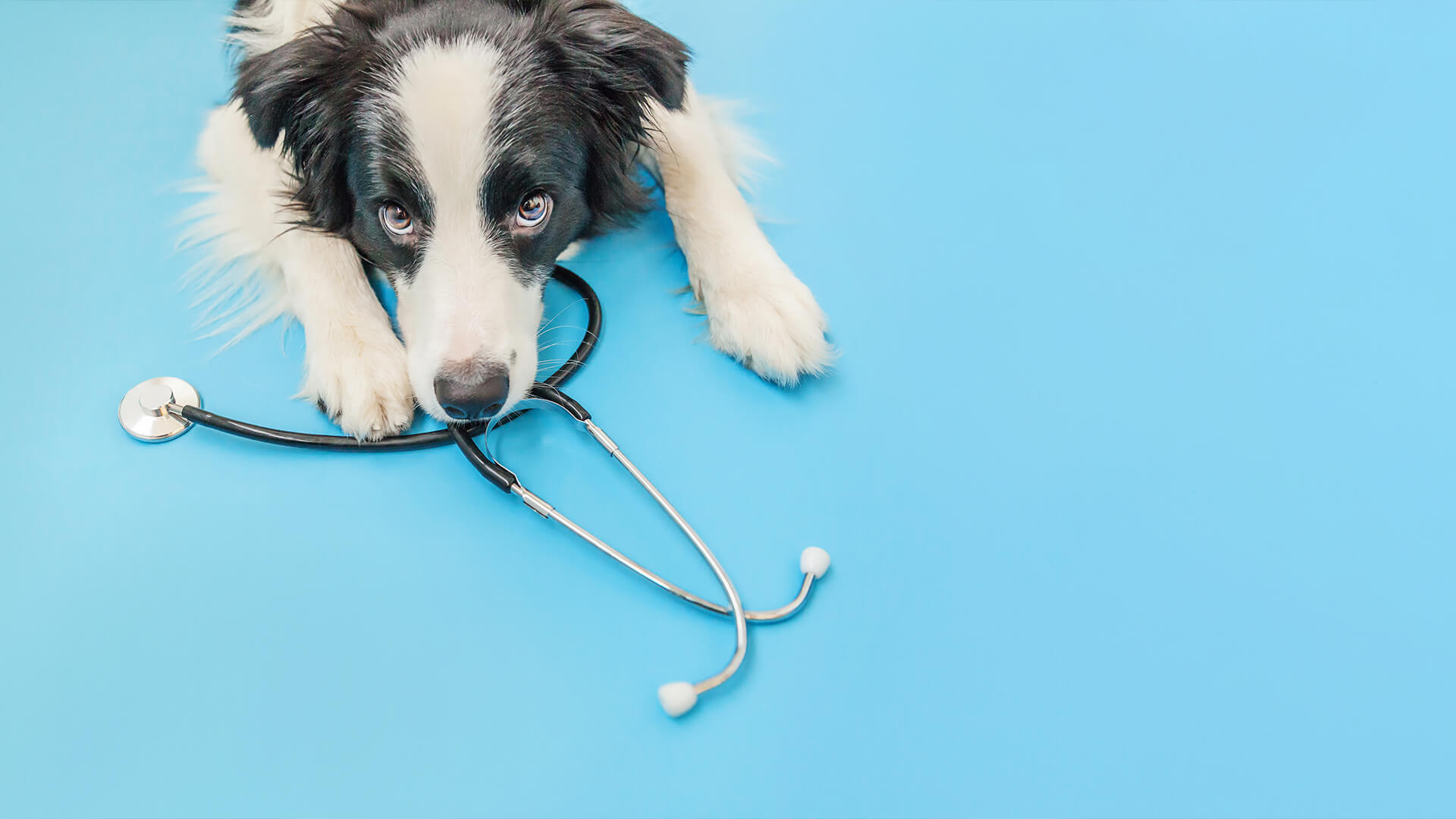 The Trick to Keeping You and Your Furry Friend Healthy and Happy