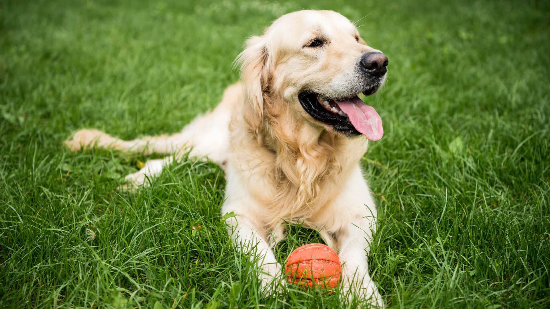 dog skin condition